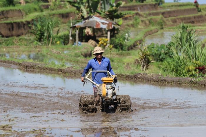 Un agricultor labra la tierra en los campos de arroz de la localidad de Jatiluih, en el centro montañoso de la isla de Bali.