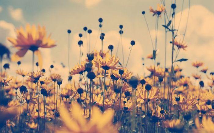flores-de-verano